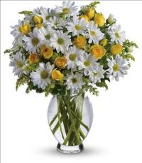 Amazing Daisy by US Teleflorist .com- Associated with other USA Teleflorists