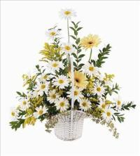 Daisies & Yellow Gerberas by US Teleflorist .com- Associated with other USA Teleflorists