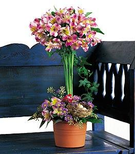 Alstroemeria Topiary by US Teleflorist .com- Associated with other USA Teleflorists